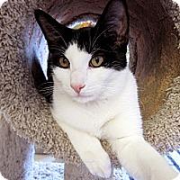 Adopt A Pet :: Paulie - Chicago, IL