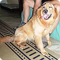 Adopt A Pet :: Nuala - Murdock, FL