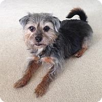 Adopt A Pet :: Abby - Toledo, OH