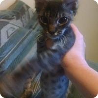 Adopt A Pet :: Junior - Walla Walla, WA