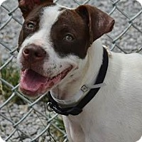 Adopt A Pet :: Maggie - Athens, GA