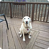 Adopt A Pet :: Lady M - Cumming, GA