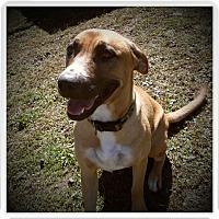 Adopt A Pet :: SUNNY - Medford, WI