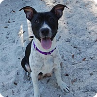 Adopt A Pet :: Freedom - Bradenton, FL