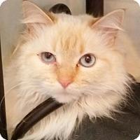 Adopt A Pet :: Precious - Codorus, PA
