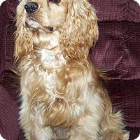 Adopt A Pet :: Quinn - Jacksonville, FL