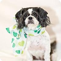 Adopt A Pet :: Nelly - Glastonbury, CT