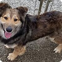 Adopt A Pet :: Cooper - Patterson, CA
