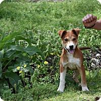 Adopt A Pet :: Colter - Groton, MA