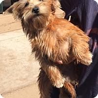 Adopt A Pet :: Addie - Dana Point, CA