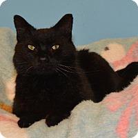Adopt A Pet :: Mason - Cincinnati, OH
