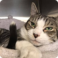 Adopt A Pet :: Watson - Chicago, IL