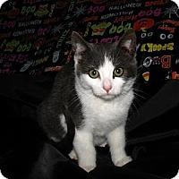 Adopt A Pet :: Luke - Norwich, NY