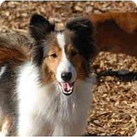 Adopt A Pet :: Kenzie - Ft. Myers, FL
