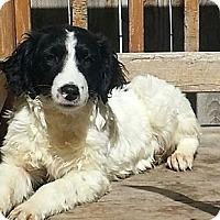 Adopt A Pet :: Kaden (PENDING!) - Chicago, IL