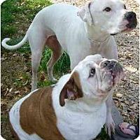 Adopt A Pet :: Tonka & Bentley - Gilbert, AZ