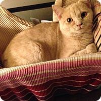 Adopt A Pet :: Shelley - Simpsonville, SC