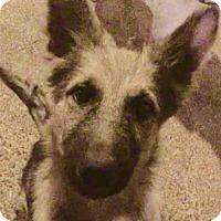 Adopt A Pet :: Kirk - Houston, TX