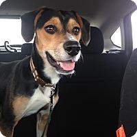 Adopt A Pet :: Tino - Cincinnati, OH