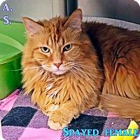 Adopt A Pet :: T-1 Mazie - Triadelphia, WV