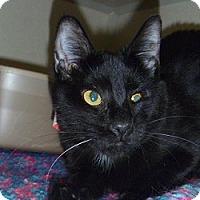 Adopt A Pet :: Minnie - Hamburg, NY