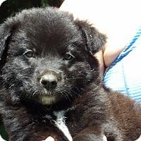 Adopt A Pet :: Scout (6 lb) Video - Sussex, NJ