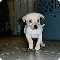 Adopt A Pet :: Mork - Silsbee, TX