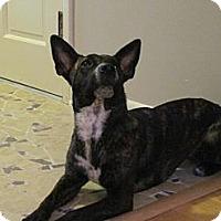 Adopt A Pet :: Kitka - Hastings, NY