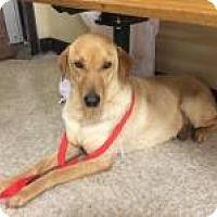Adopt A Pet :: CLEO - Sugar Land, TX