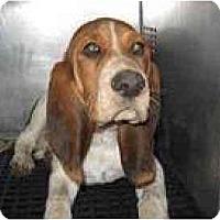 Adopt A Pet :: Bosworth - Albuquerque, NM