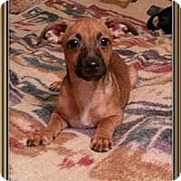 Adopt A Pet :: Memo - Encinitas, CA