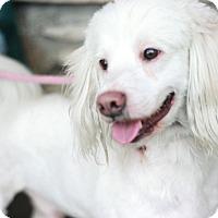 Adopt A Pet :: Easy - Canoga Park, CA
