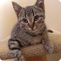Adopt A Pet :: Maci - Sunderland, ON