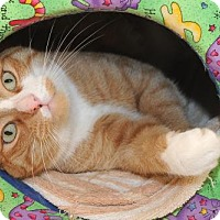 Adopt A Pet :: Andy - Warminster, PA