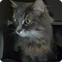 Adopt A Pet :: Roxy - Hamburg, NY