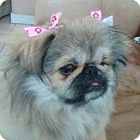 Adopt A Pet :: Lily - San Diego, CA