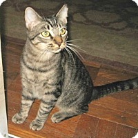 Adopt A Pet :: Parker - Colmar, PA