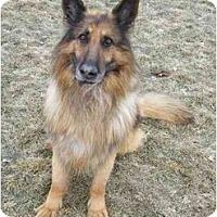 Adopt A Pet :: Sargent - Hamilton, MT