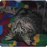 Adopt A Pet :: Mr. Furly - Marietta, GA