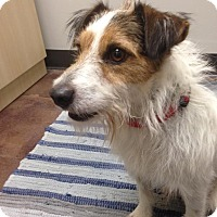 Adopt A Pet :: Farley - Houston, TX