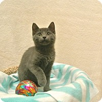 Adopt A Pet :: Rolly - Foothill Ranch, CA