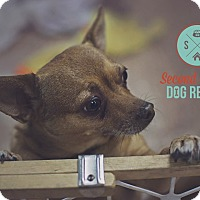Adopt A Pet :: Dexter - Las Vegas, NV