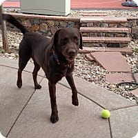 Adopt A Pet :: Odell - Evergreen, CO