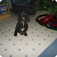 Adopt A Pet :: Fancy -Adopted! - Kannapolis, NC