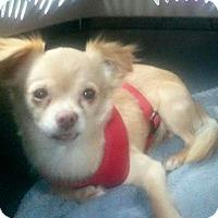 Adopt A Pet :: #39 Clydie in Missouri - Festus, MO