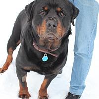 Adopt A Pet :: Teddy - Rexford, NY