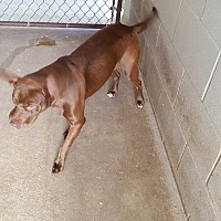 Adopt A Pet :: Spice - Marianna, FL
