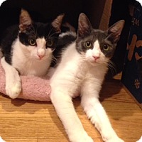 Adopt A Pet :: Mouse & Squirrel - Harrison, NY