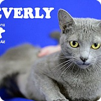 Adopt A Pet :: Beverly - Carencro, LA