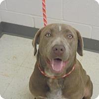 Adopt A Pet :: Luna LonleyHeart - Gulfport, MS
